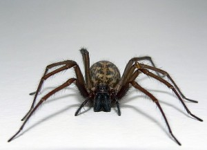 "Yeah, I'm sorry.  I almost couldn't even type ""giant spider"" into Google.  My nerves are frazzled just looking at this thing."