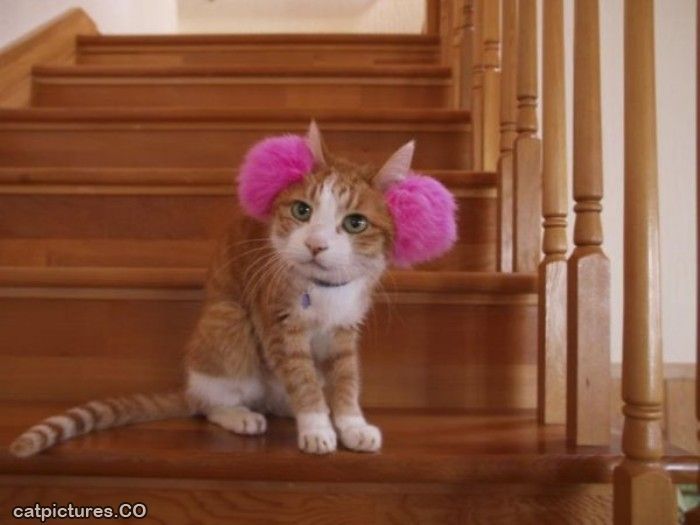 Photo credit: www.catpictures.co I'm not sure how this cat feels about them, though.  Maybe they shouldn't be for cats.